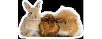 Kaninchen & Meerschweinchen
